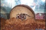 Vtáčkare moje_022