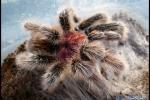 Vtáčkare moje_08